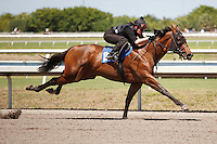 #159Fasig-Tipton Florida Sale,Under Tack Show. Palm Meadows Florida 03-23-2012 Arron Haggart/Eclipse Sportswire.