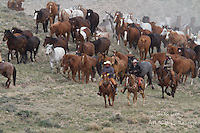 Cowboy Photo. Cowboy and Cowgirl photographs of western ranches working with horses and cattle by western cowboy photographer Jess Lee. Photographing ranches big and small in Wyoming,Montana,Idaho,Oregon,Colorado,Nevada,Arizona,Utah,New Mexico.