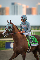 HALLANDALE, FL - JANUARY 28: California Chrome in his final race of his career in Pegasus World Cup Invitational at Gulfstream Park on January 28, 2017 in Hallandale Beach, Florida. (Photo by Zoe Metz/Eclipse Sportswire/Getty Images)