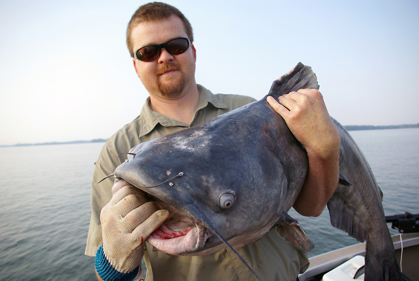 Angler with trophy blue catfish caught in Wheeler Lake, Alabama