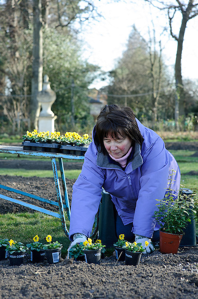 Volunteers planting at Chiswick House & Gardens