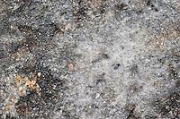 Salzkruste, Salz, Meersalz, Meerwasser ist verdunstet, zurückgeblieben ist eine Salzschicht, Verdunstung, Rockpool, salt, salty crust, salt crust, sea salt, marine salt, bay salt, solar salt, evaporation