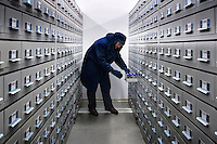 Botanist Robin Probert removes some seeds in the storage facility which is kept at a cold temperature in The Wellcome Trust Millennium Building at the Millennium Seed Bank at Wakehurst Place in West Sussex. The building houses facilities for seed-preparation, laboratories and public exhibitions. The large storage vault lies underneath the building. The Millennium Seed Bank Partnership is coordinated by Kew Gardens and aims to collect seeds from every wild plant in the world to insure against extinction. It reached its target of banking seeds from all of the UK's native plant species as well as banking 10% of the world's wild plant species in 2009, and aims to have 25% by 2020.
