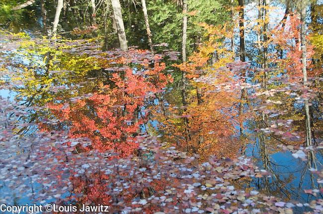 fall leaves,upstate ny