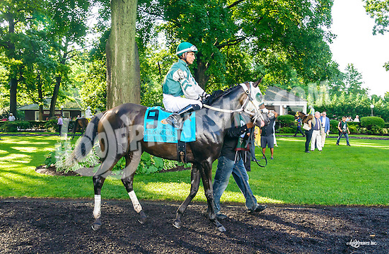 Eighth Wonder before The Delaware Oaks (gr 3) at Delaware Park on 7/9/16