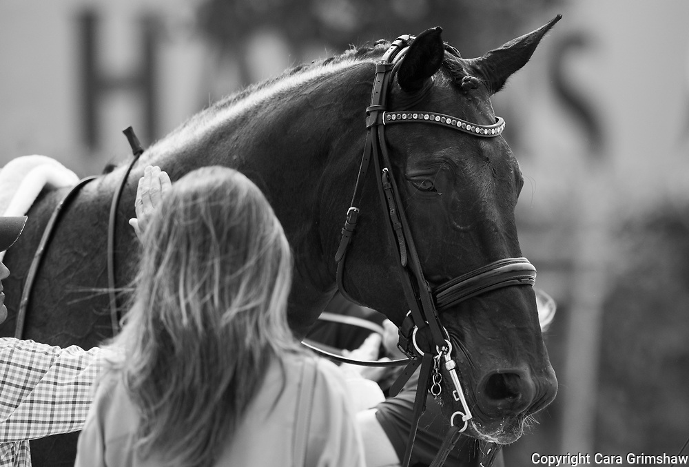 World Equestrian Festival At Chio Aachen Germany 2017