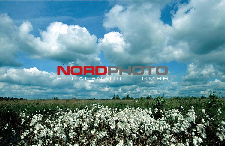 Wollgras im Moor<br /> Foto &copy; nordphoto / Willi Rolfes<br /> <br /> <br /> <br />  *** Local Caption *** Bildinfo: 20 * 30 bei 300 DPI<br /> Foto ist honorarpflichtig! zzgl. gesetzl. MwSt.<br />  Belegexemplar erforderlich<br /> Adresse: nordphoto<br /> Georg-Reinke-Strasse 1<br /> 49377 Vechta