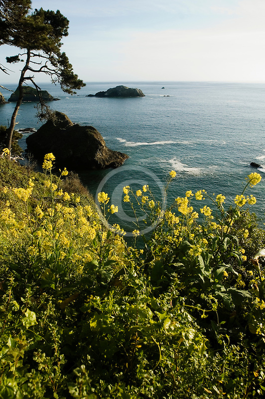 California, Mendocino County, Coastal bluffs, Elk