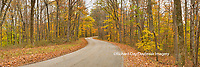 63995-00905 Road in fall, Brown County State Park, IN