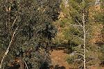 Israel, Coastal Plain, trees in Nahal Pura