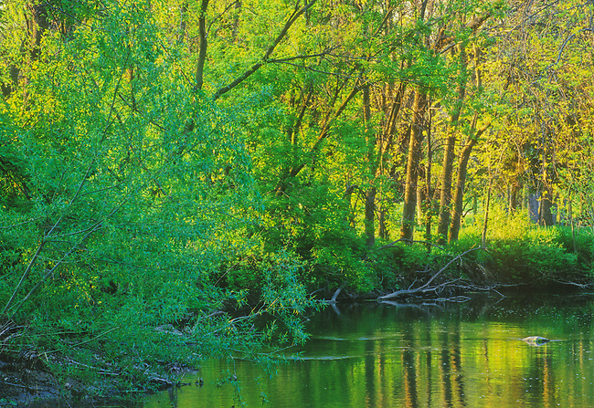 Spring color is warmed by late sunlight and reflects in the waters of the Pike River at Petrifying Springs County Park in Kenosha County in Southeast Wisconsin