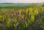Nachusa Grasslands Natural Area, Illinois: Overview of sumer tallgrass prairie and rolling hills