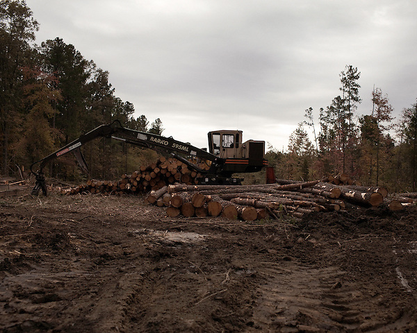October 31, 2011. Chatham Countyl, NC.. Logging in Chatham County..