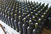 Bottles standing upright waiting to be labelled and capsuled. Bodega Pisano Winery, Progreso, Uruguay, South America