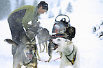 A young woman adjusts the harnesses of her dogsled team in Jackson Hole, Wyoming.