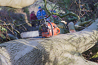 Saturday 10 January 2015<br /> Pictured: Chain saw<br /> RE: Severe gales across Wales break in half a 100 year old beech tree from a garden falling across Penllwyn Lane in Graig-Y-Rhacca, Caerphilly, road closed.