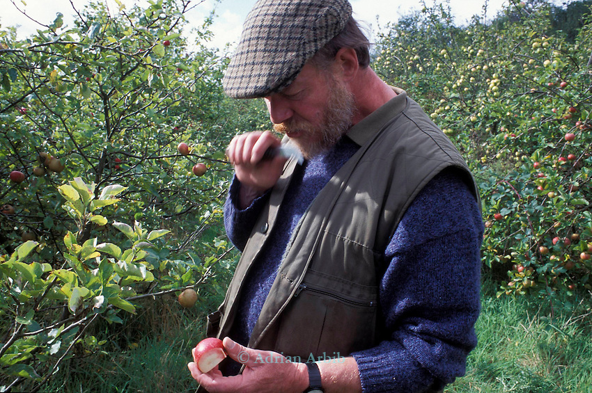 Nick Houston  at JC Allgrove's orchards, Langley, Slough which  was the last of the great apple nurseries in the Thames Valley. In the 1940s it had 1000 varieties of apple trees. <br />