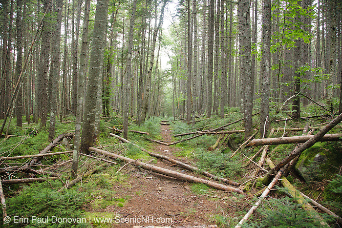 Shoal Pond Trail in the Pemigewasset Wilderness of the White Mountains, New Hampshire USA during the summer months. This trail is an old railroad bed once used by the East Branch & Lincoln Railroad during the logging era to remove logs from the Shoal Pond Valley.