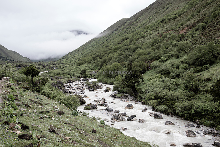 mount Jhomolhari , the place where are the caterpillar fungus in Bhutan, June 2016