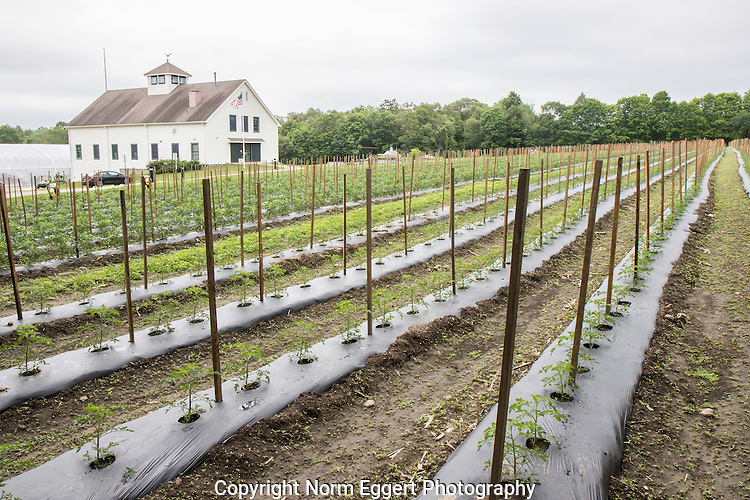 Brigham Hill Farm in North Grafton, Massachusetts, home of the Community Harvest Project
