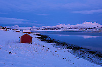 Red seaside barns in snowy winter landscape, Offersøy, Lofoten Islands, Norway