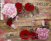 Interlitho-Alberto, FLOWERS, BLUMEN, FLORES, photos+++++,roses,KL16556,#f#, EVERYDAY
