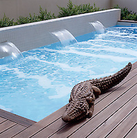 A life-like sculpture of a crocodile prowls the teak surround of this small urban swimming pool