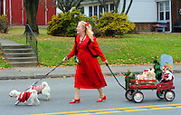 12/1/12 1:07:22 PM - Souderton, PA: .Denise Myers of Quakertown, Pennsylvania walks with her dogs, Rascal (L) and Winston © as they march on Main Street during the Souderton/Telford Holiday Parade December 1, 2012 in Souderton, Pennsylvania -- (Photo by William Thomas Cain/Cain Images)