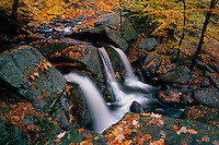 Trap Falls and American beech trees<br />