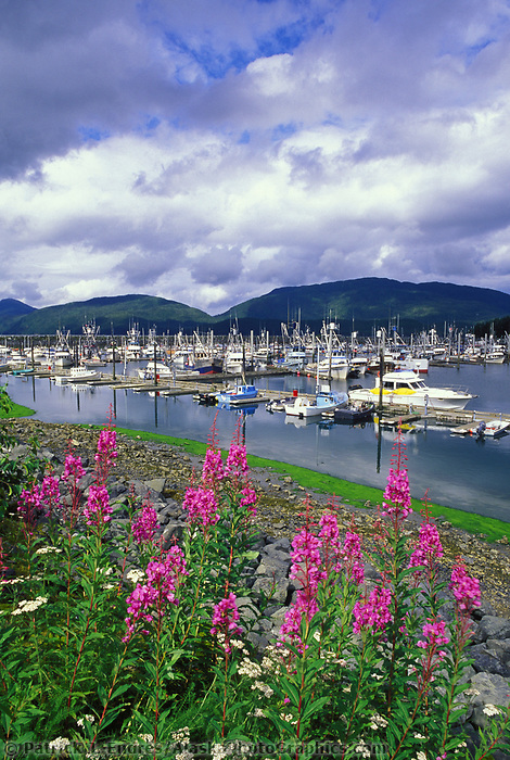 Cordova boat harbor, fireweed, Eastern Prince William Sound, Alaska