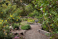Gravel path edged by low fence edging through Kyte drought tolerant back yard layered habitat California native plant garden