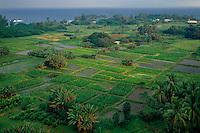 Taro farms on the Keanae Peninsula<br /> Hana Highway<br /> Island of Maui<br /> Hawaii