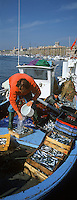 Europe/France/13/Bouches-du-Rhône/ Marseille: retour de pèche arrivée des pécheurs au marché aux poissons - Quai des Belges [Non destiné à un usage publicitaire - Not intended for an advertising use]