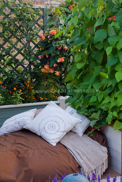 Garden bench bed with pillows, privacy fence with scarlet runner vines Phaseolus coccineus on wooden trellis, shrubs, a secluded garden spot