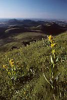 Europe/France/Auverne/63/Puy-de-Dôme/Parc Naturel Régional des Volcans/Monts Dômes: La chaine des puys et gentianes