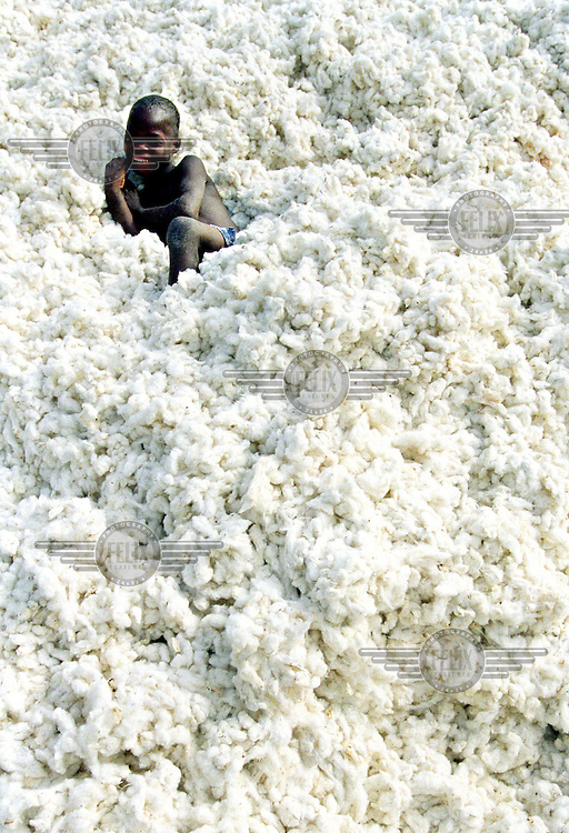 "©Sven Torfinn/Panos Pictures. .Benin, Parakou 2002.child sits on a heap of raw cotton, nera the cotton processing company, ginnery ""Sonapra, cotton is one of the main export products of Benin, agriculture, economy, industry."