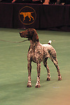 German Shorthair Pointer, Best of his Breed, at the Westminster dog show Shopping cart has 3 Tabs:<br />