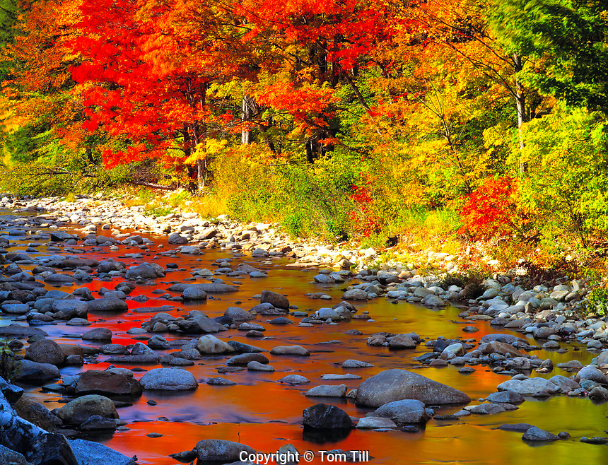 Ammonoosuc River, White Mountain National Forest, New Hampshire    Autumn reflection of sugar maple trees