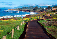 On the pathway around Moonstone Bay near Cambria on California central coast.