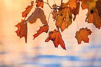 Skärgård höst/ archipelago autumn