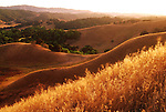 Golden, rolling hills in Briones Regional Park defines California.