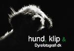 Hund & Klip