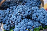 On a street market. Cabernet Sauvignon grapes. Bordeaux city, Aquitaine, Gironde, France