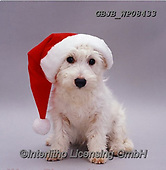 Kim, CHRISTMAS ANIMALS, WEIHNACHTEN TIERE, NAVIDAD ANIMALES, fondless, photos+++++,GBJBWP08433,#xa#