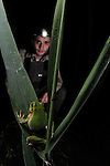 A herpetologist observing an Italian Tree Frog (Hyla intermedia) in the vegetation during a night survey.