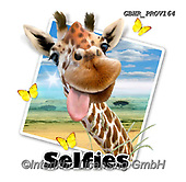 Howard, SELFIES, paintings+++++Giraffe selfie,GBHRPROV164,#Selfies#, EVERYDAY