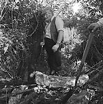 The Valley Minkhounds..Tom Dover, a regular follower, listens for a mink that may have escaped down a rotten tree trunk, and into the root system. Near Aldermaston, Berkshire...Hunting with Hounds / Mansion Editions (isbn 0-9542233-1-4) copyright Homer Sykes. +44 (0) 20-8542-7083. < www.mansioneditions.com >..