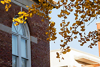 Gingko leaves next to McCain Hall.<br />  (photo by Megan Bean / &copy; Mississippi State University)