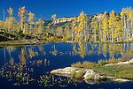 Aspen Trees, Beaver Pond, Lime Creek Road near Durango, Colorado