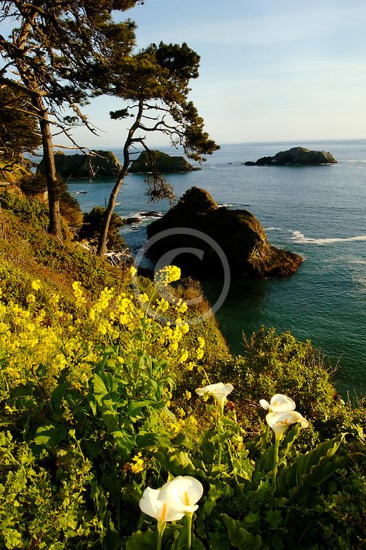 California, Mendocino County, Coastal bluffs, Elk